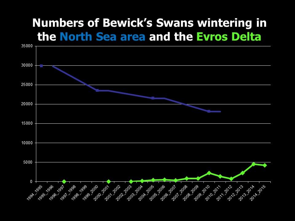 evolution du nombre de Cygnes de Bewick hivernant dans la région de la mer du Nord